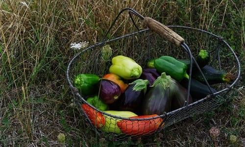 alimentos colhidos dentro de uma cesta