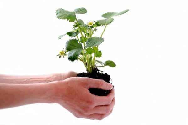 Pessoa segurando muda de árvore para simbolizar o tema como crescer na vida