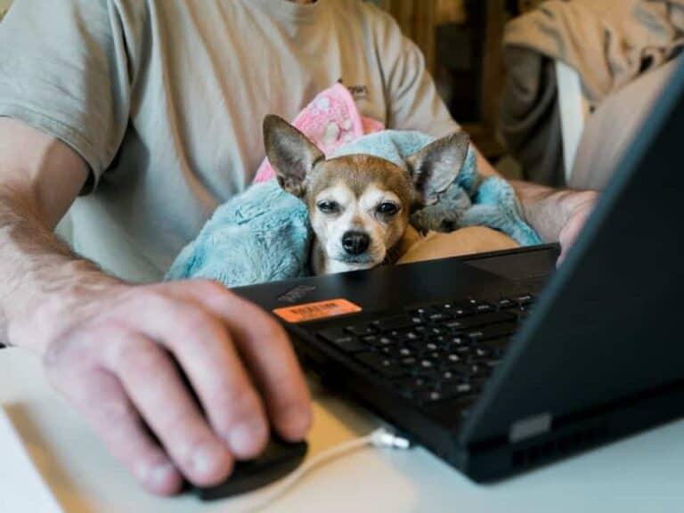 Imagem de um homem em casa buscando formas de como ganhar dinheiro extra nos finais de semana