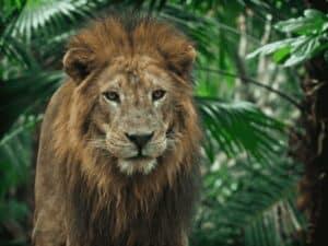leão, representando restituição do lote residual do irpf