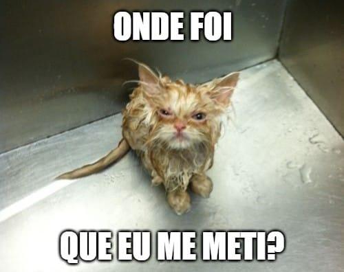 gato molhado que se meteu no lugar errado